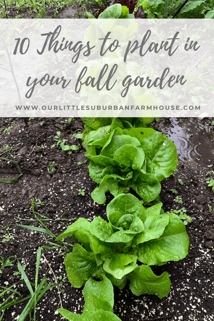 4 Things to plant in your fall garden (Zone 4) - Our Little