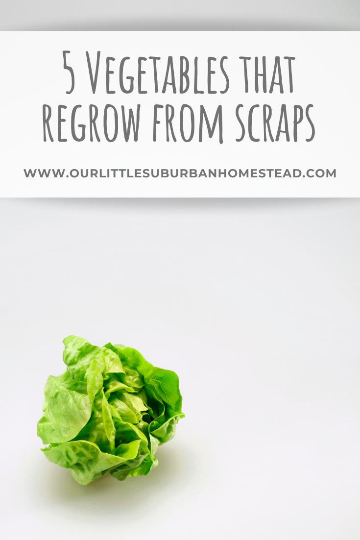 Vegetables that regrow from scraps