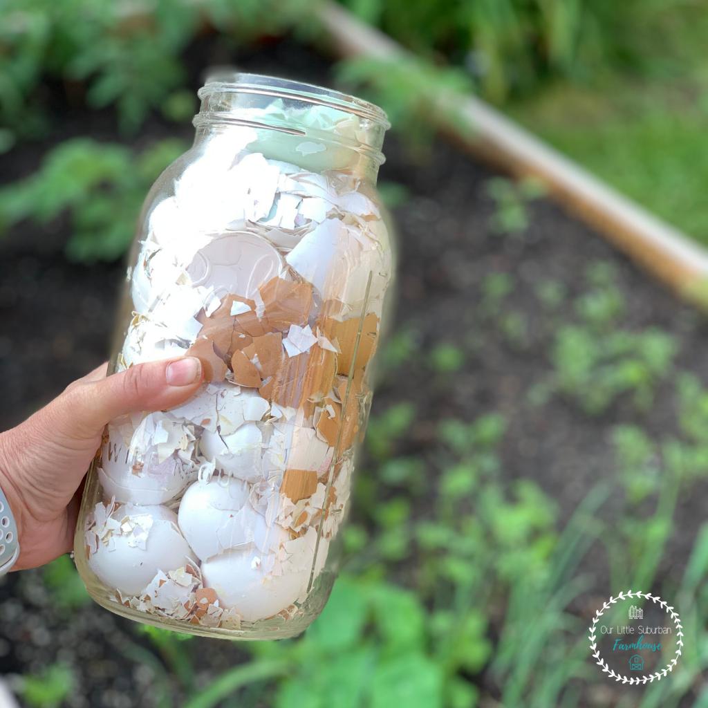 Eggshells in a mason jar