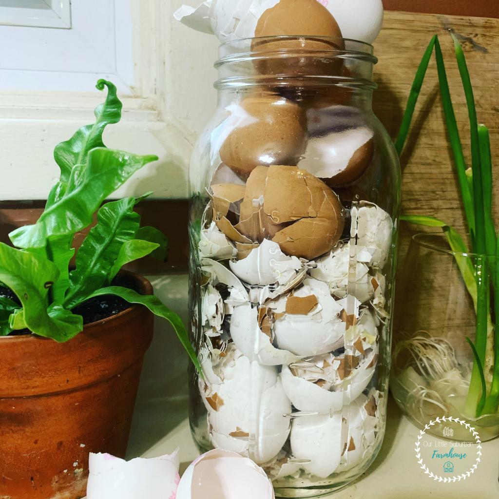 Eggshells in mason jar