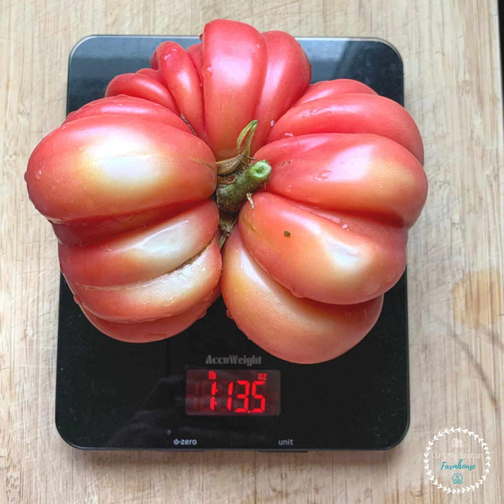 Almost 2lb heirloom tomato