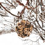 DIY Wild Bird Treats