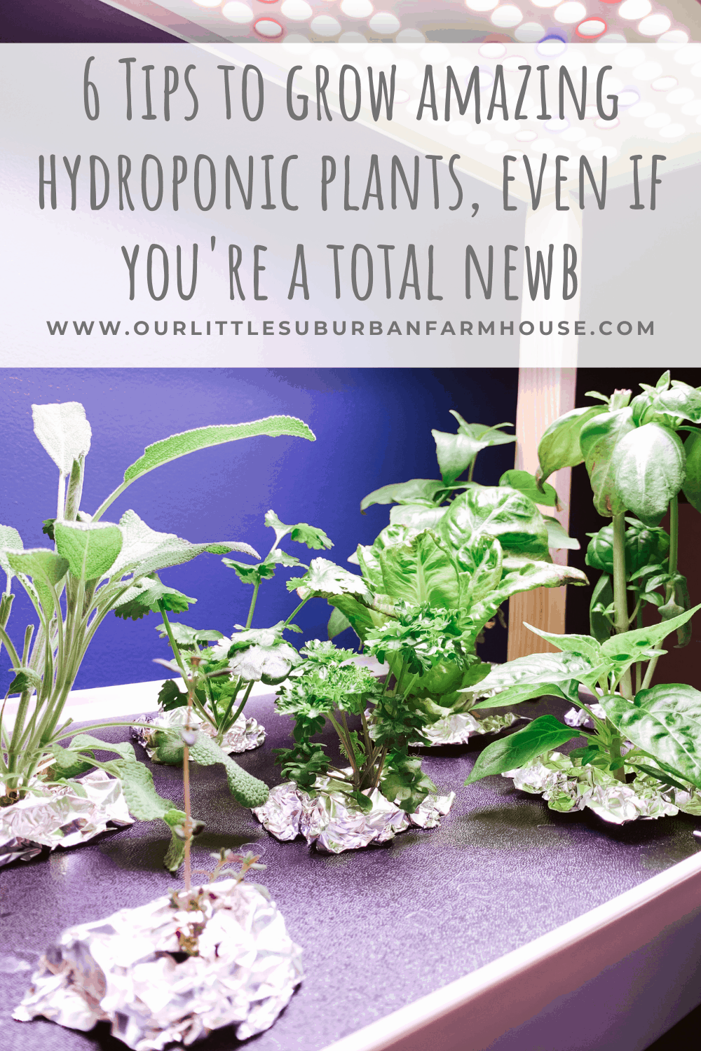 6 Tips to grow amazing hydroponic plants, even if you're a total newb