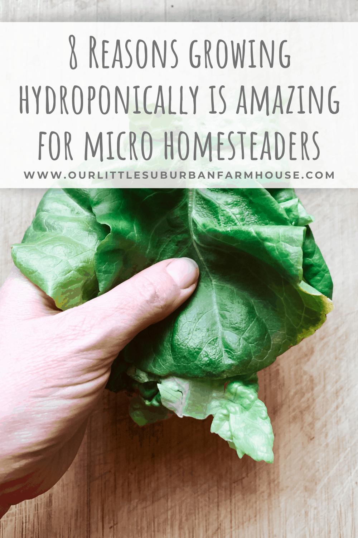 Hydroponics micro homesteaders