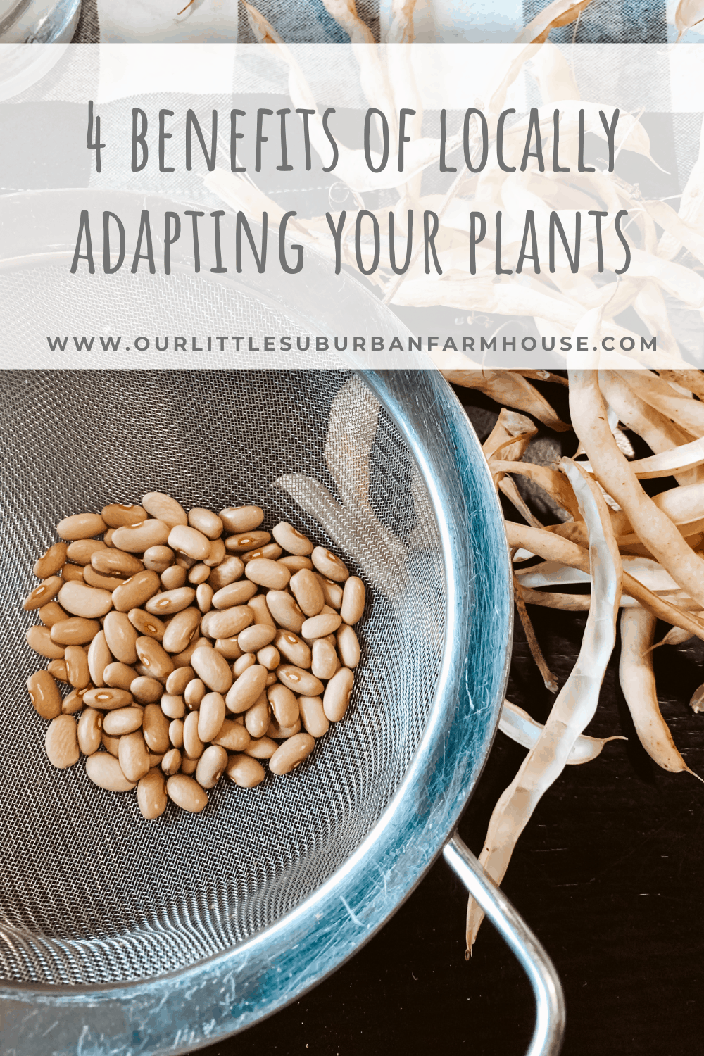 Locally adapting your plants