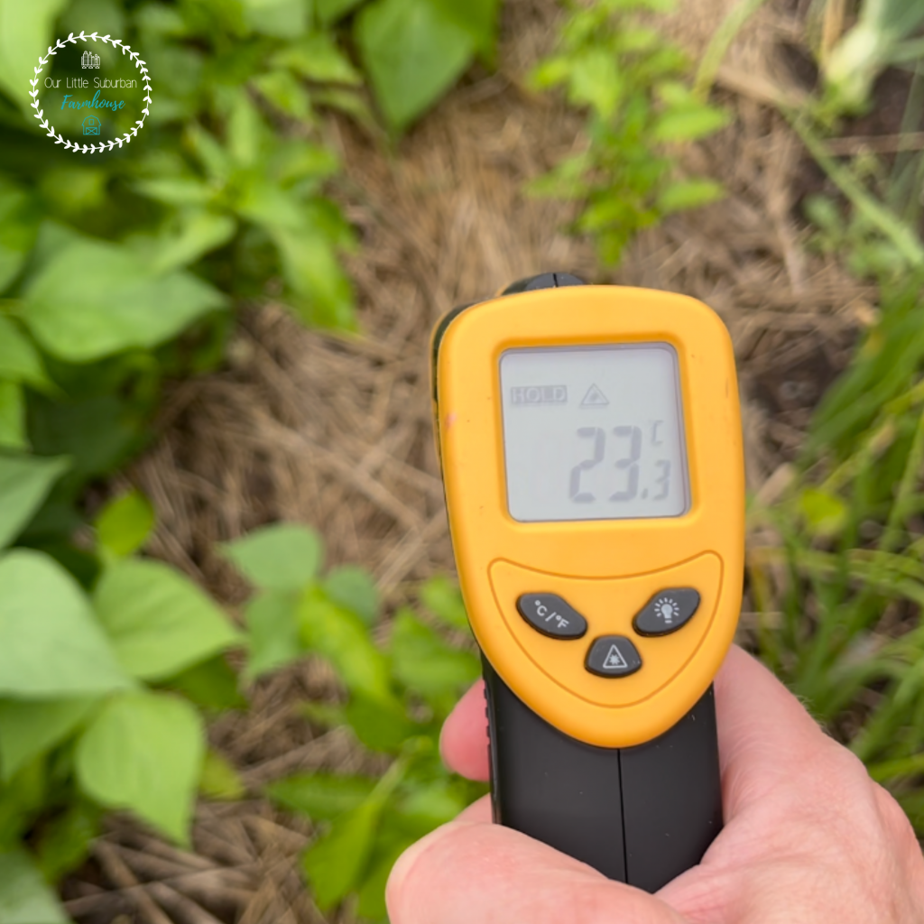 Determining the microclimates in your garden